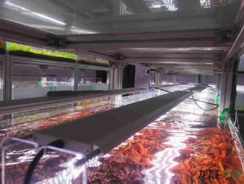 榆林哪个水族店有财神鹦鹉郑州水草养殖工作室出售水草 榆林水族批发市场 榆林水族批发市场第2张