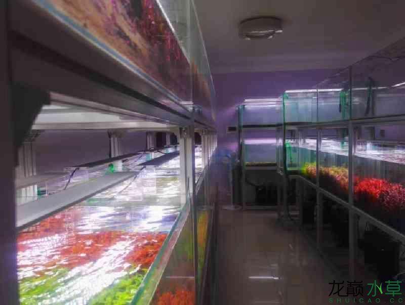 榆林哪个水族店有财神鹦鹉郑州水草养殖工作室出售水草 榆林水族批发市场 榆林水族批发市场第3张