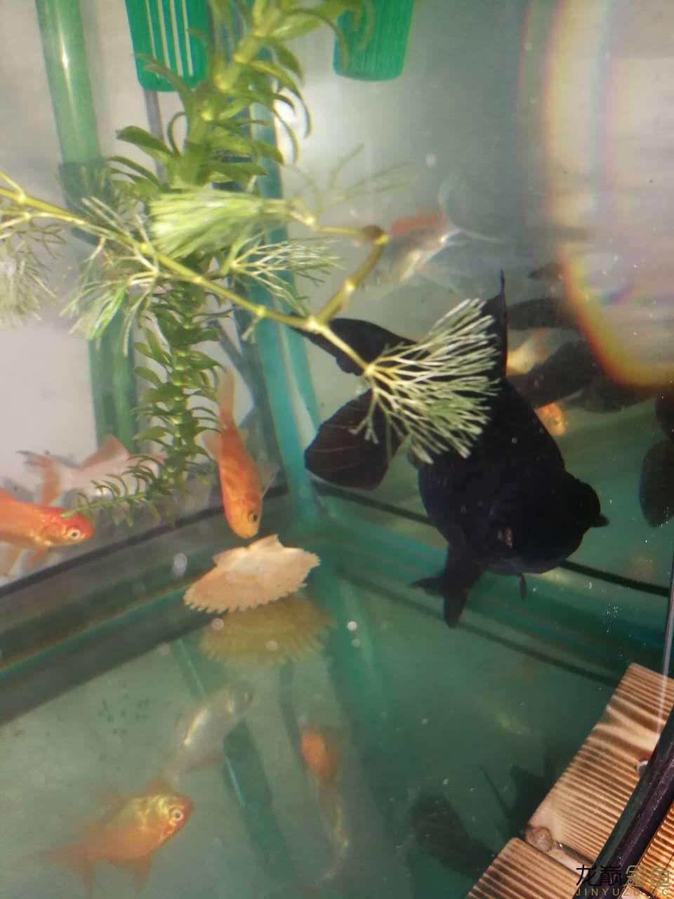 鱼缸2.jpg