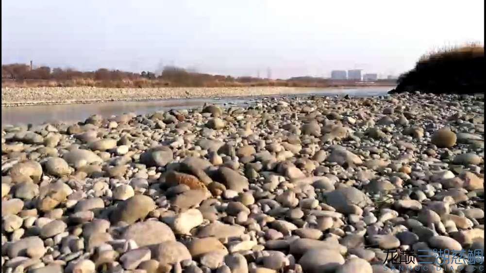开车到了20公里外的金马河,这里可以找到天然的鹅卵石