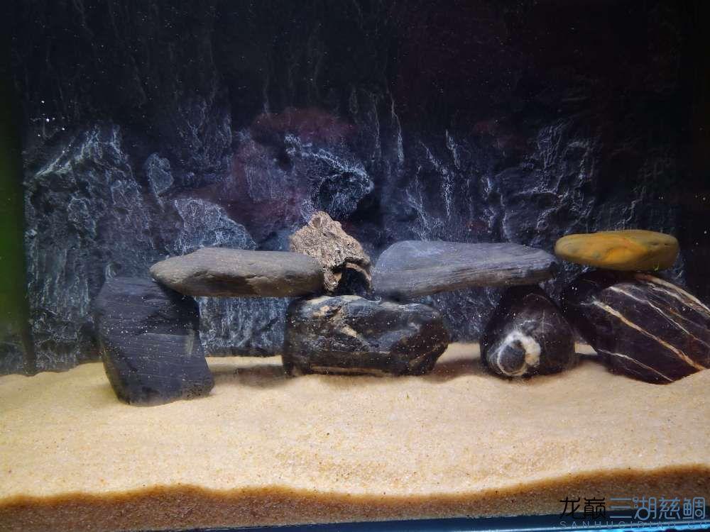 1缸捡来的鹅卵石