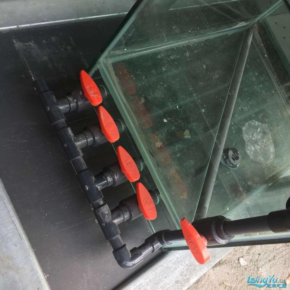 延安鱼缸水族箱批发辉煌水族7米鱼缸上缸1300现场制作过程多图慎完工 延安观赏鱼 延安龙鱼第28张