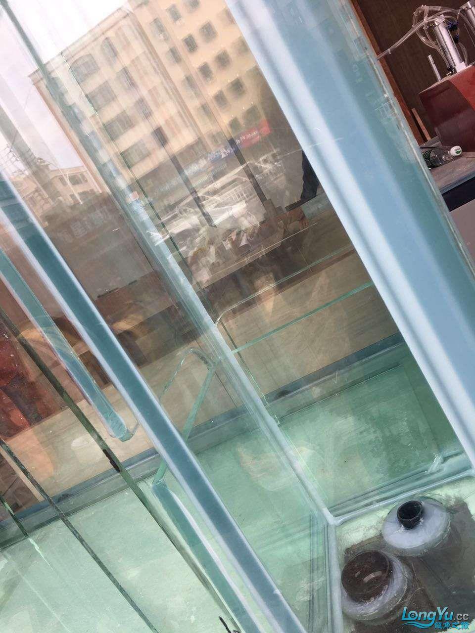 延安鱼缸水族箱批发辉煌水族7米鱼缸上缸1300现场制作过程多图慎完工 延安观赏鱼 延安龙鱼第81张