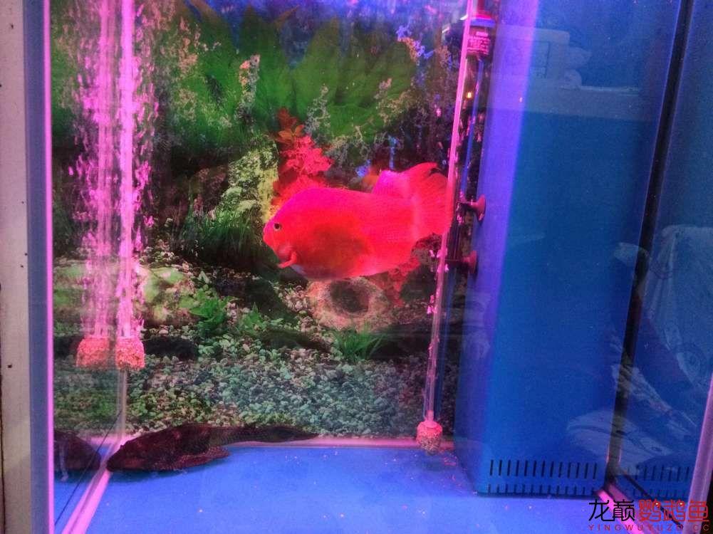 鱼缸溢流区