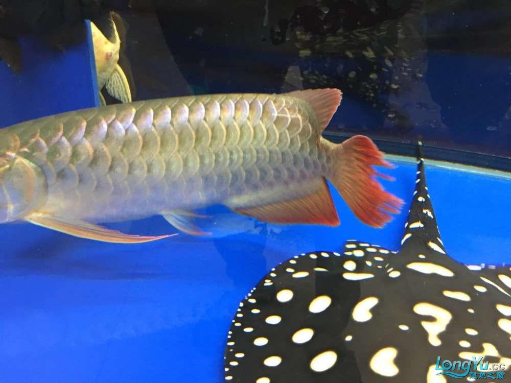 这是我的鱼