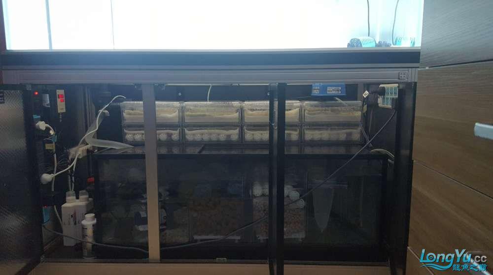 底滤,思凡2桶,龙鱼指甲一箱,绘彩硝化魔球120个,