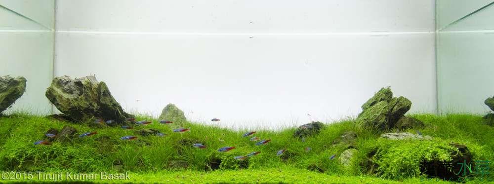 绿色峡谷.jpg