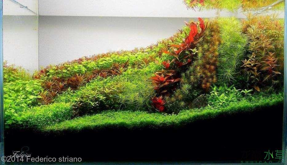我的植物油.jpg
