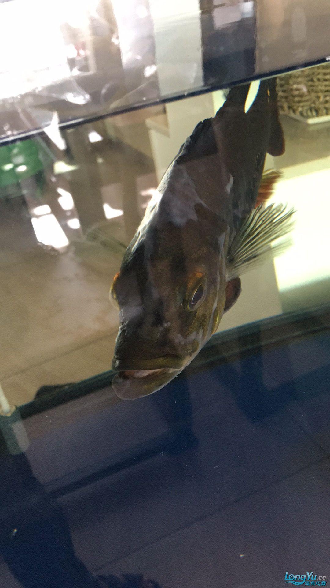成都热带鱼水族箱市场红龙呼吸困难 成都水族批发市场 成都龙鱼第7张