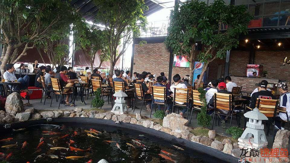 一间锦鲤咖啡馆 北京龙鱼论坛 北京龙鱼第15张