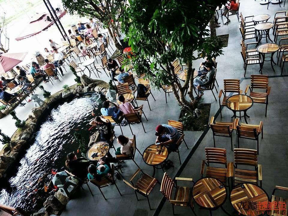 一间锦鲤咖啡馆 北京龙鱼论坛 北京龙鱼第21张