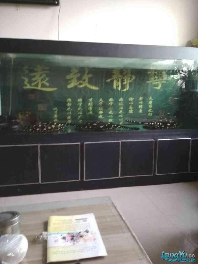 西宁女王(大帆)苗终于繁殖出来了 西宁龙鱼论坛 西宁龙鱼第2张