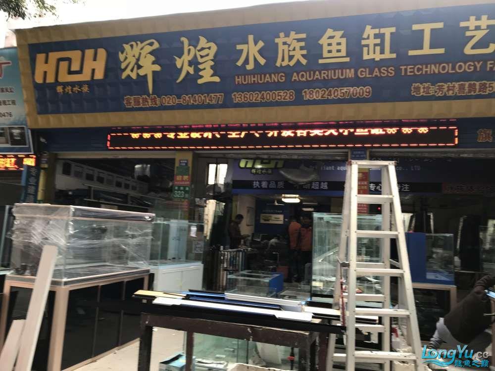 重庆粗线银板鱼哪个店的最好新人再次入水开缸大吉 重庆观赏鱼 重庆水族批发市场第6张