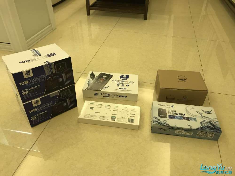 重庆粗线银板鱼哪个店的最好新人再次入水开缸大吉 重庆观赏鱼 重庆水族批发市场第7张