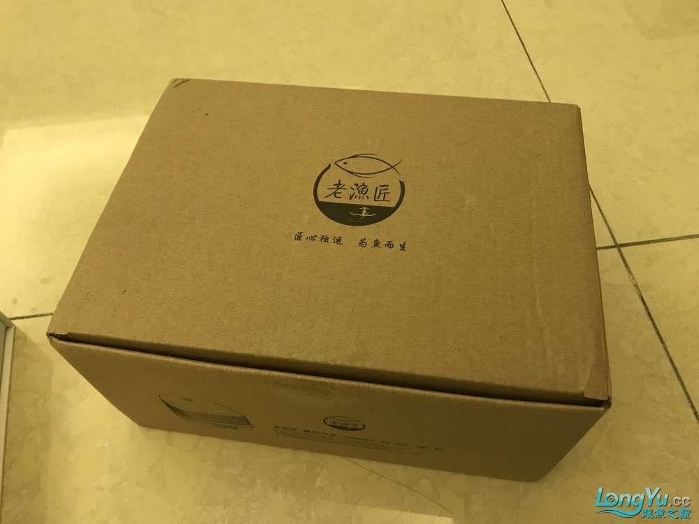重庆粗线银板鱼哪个店的最好新人再次入水开缸大吉 重庆观赏鱼 重庆水族批发市场第9张