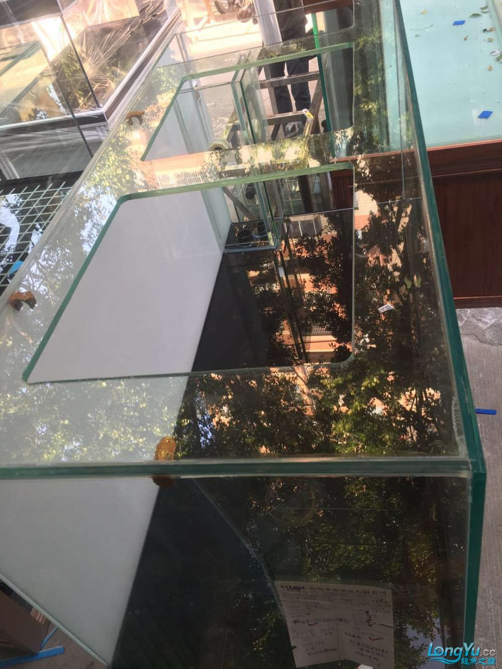 重庆粗线银板鱼哪个店的最好新人再次入水开缸大吉 重庆观赏鱼 重庆水族批发市场第15张