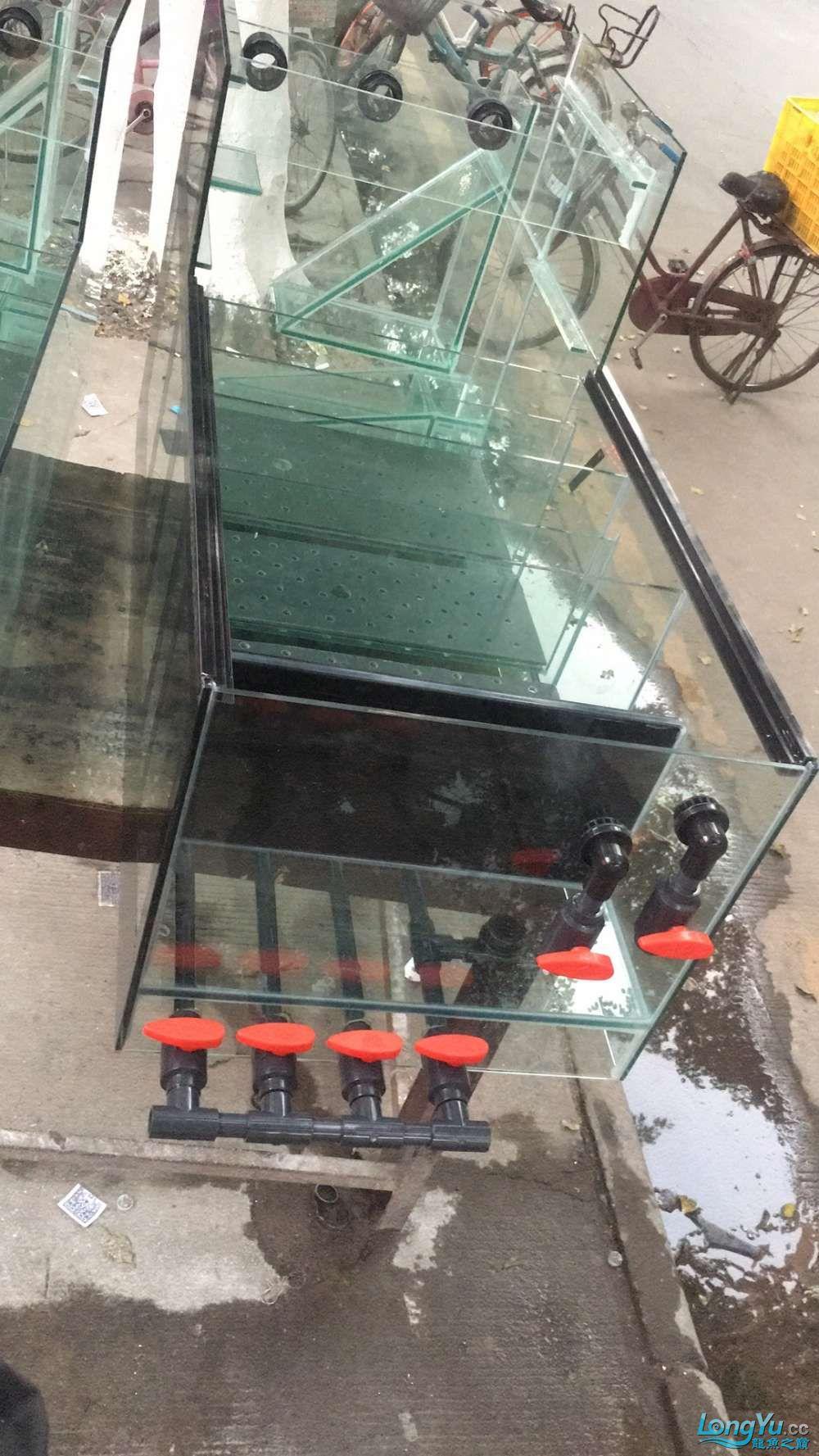 重庆粗线银板鱼哪个店的最好新人再次入水开缸大吉 重庆观赏鱼 重庆水族批发市场第16张