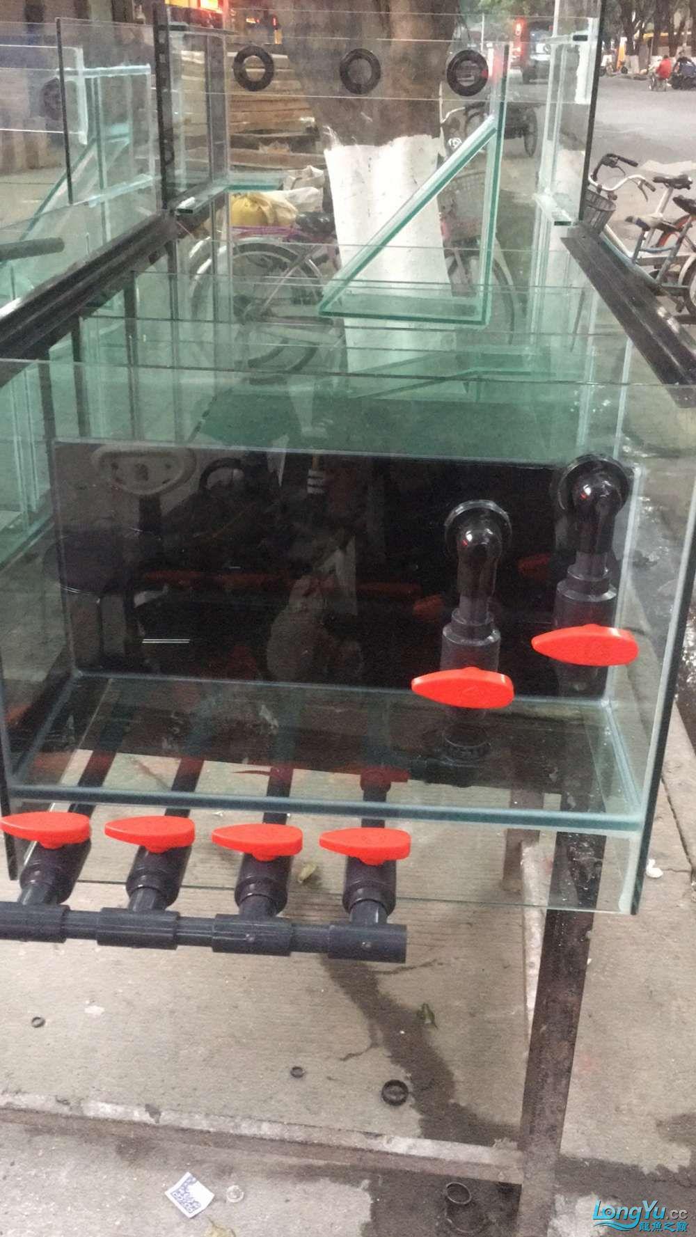 重庆粗线银板鱼哪个店的最好新人再次入水开缸大吉 重庆观赏鱼 重庆水族批发市场第20张