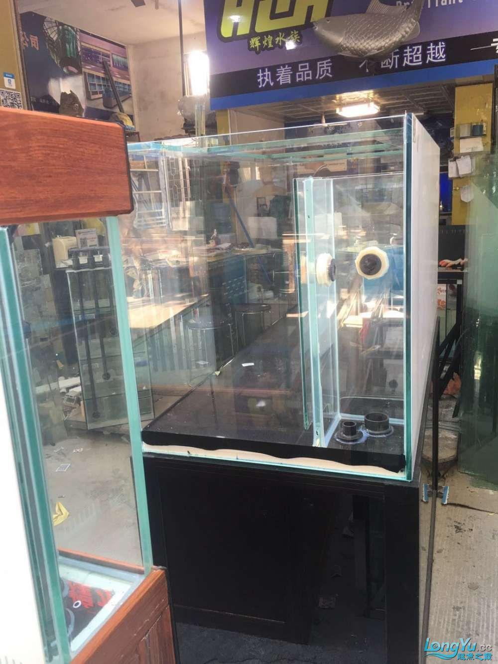 重庆粗线银板鱼哪个店的最好新人再次入水开缸大吉 重庆观赏鱼 重庆水族批发市场第24张