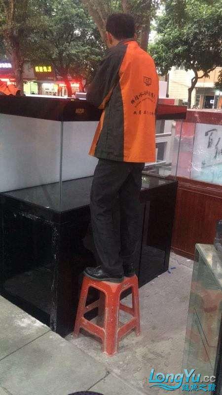 重庆粗线银板鱼哪个店的最好新人再次入水开缸大吉 重庆观赏鱼 重庆水族批发市场第26张