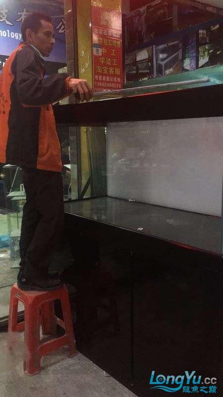 重庆粗线银板鱼哪个店的最好新人再次入水开缸大吉 重庆观赏鱼 重庆水族批发市场第27张