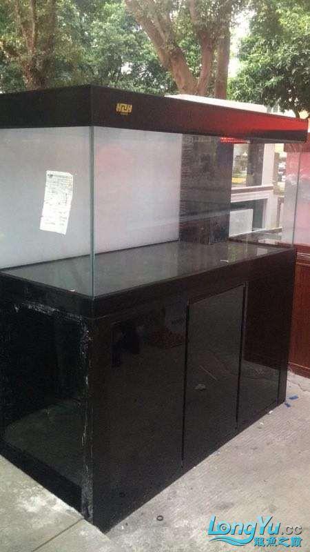 重庆粗线银板鱼哪个店的最好新人再次入水开缸大吉 重庆观赏鱼 重庆水族批发市场第28张