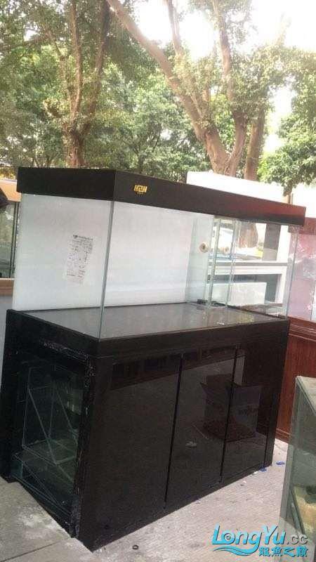 重庆粗线银板鱼哪个店的最好新人再次入水开缸大吉 重庆观赏鱼 重庆水族批发市场第30张