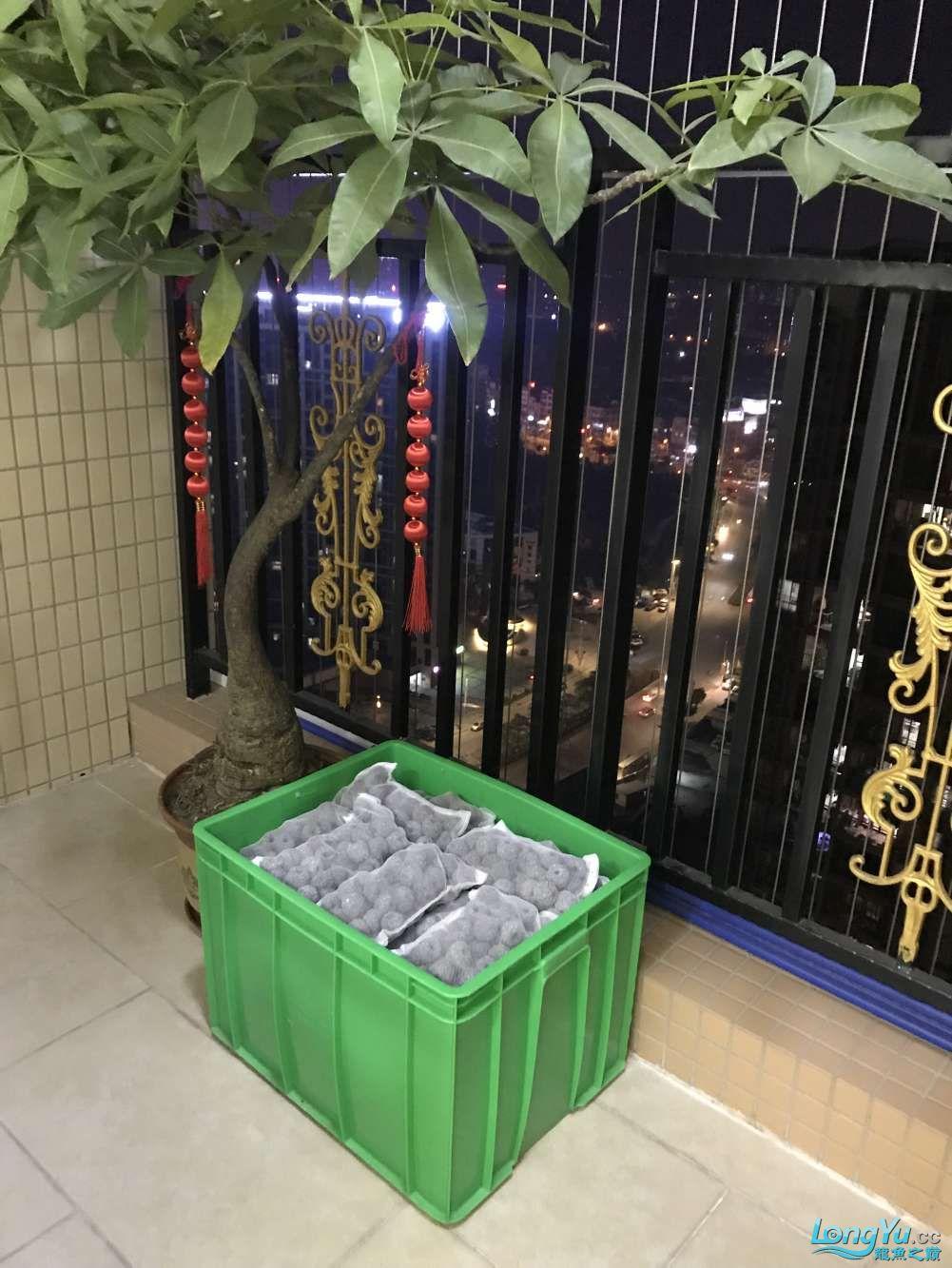 重庆粗线银板鱼哪个店的最好新人再次入水开缸大吉 重庆观赏鱼 重庆水族批发市场第14张