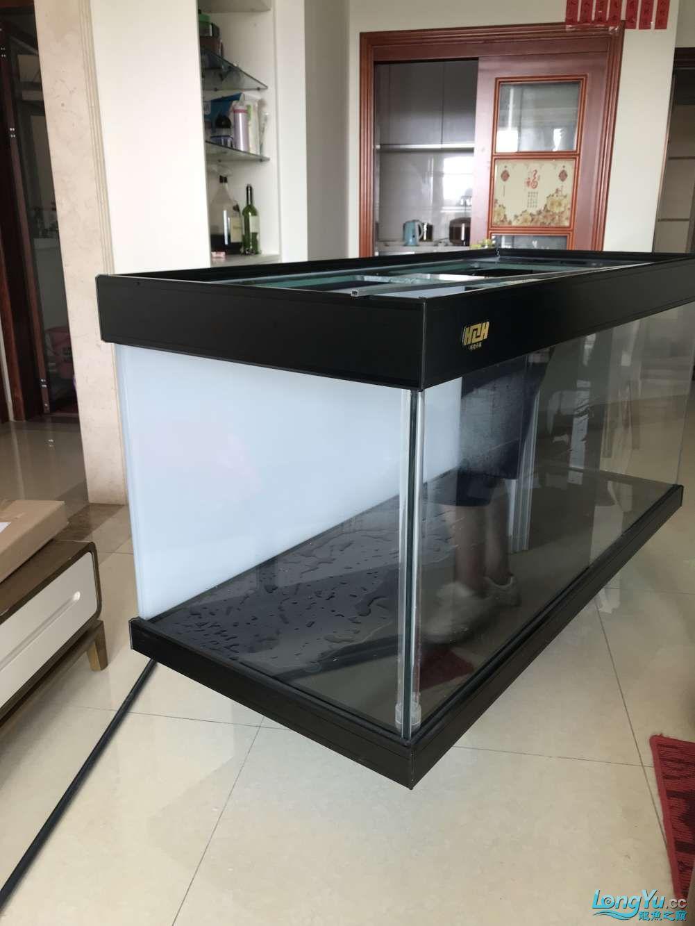 重庆粗线银板鱼哪个店的最好新人再次入水开缸大吉 重庆观赏鱼 重庆水族批发市场第32张