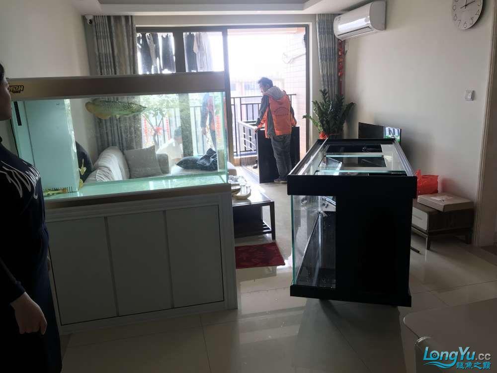 重庆粗线银板鱼哪个店的最好新人再次入水开缸大吉 重庆观赏鱼 重庆水族批发市场第33张