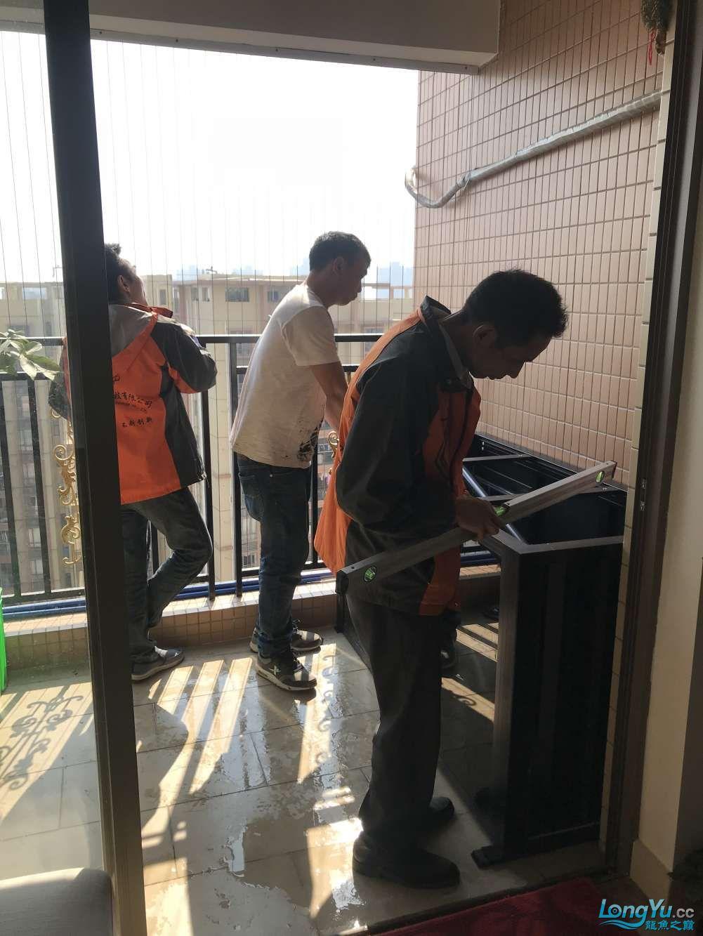 重庆粗线银板鱼哪个店的最好新人再次入水开缸大吉 重庆观赏鱼 重庆水族批发市场第36张