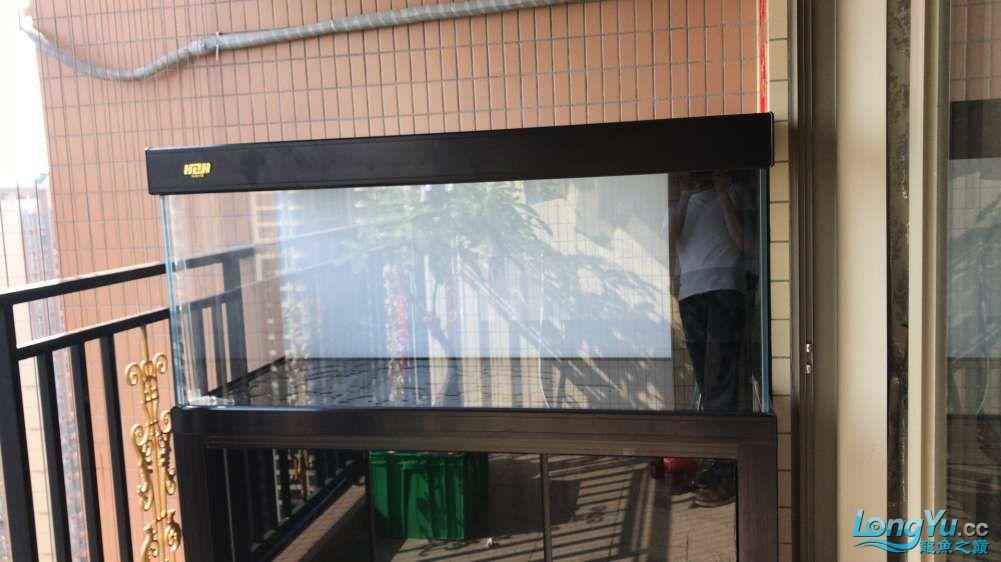 重庆粗线银板鱼哪个店的最好新人再次入水开缸大吉 重庆观赏鱼 重庆水族批发市场第37张