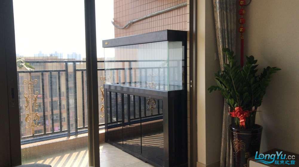 重庆粗线银板鱼哪个店的最好新人再次入水开缸大吉 重庆观赏鱼 重庆水族批发市场第38张