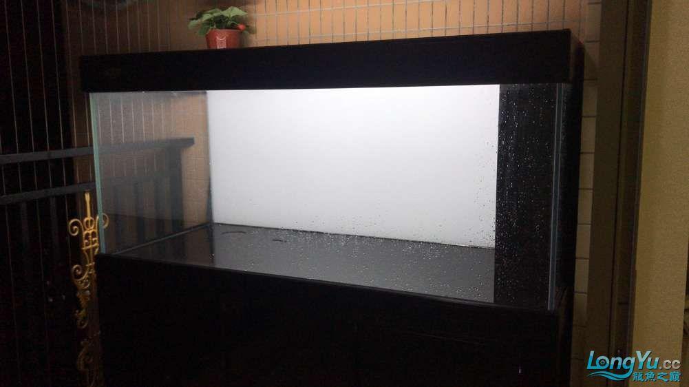 重庆粗线银板鱼哪个店的最好新人再次入水开缸大吉 重庆观赏鱼 重庆水族批发市场第41张