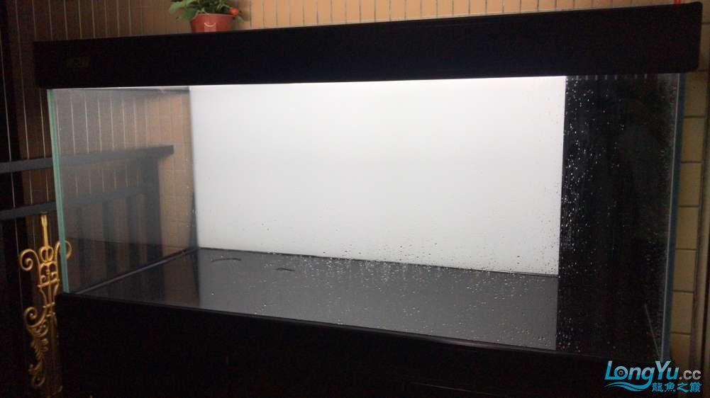 重庆粗线银板鱼哪个店的最好新人再次入水开缸大吉 重庆观赏鱼 重庆水族批发市场第42张