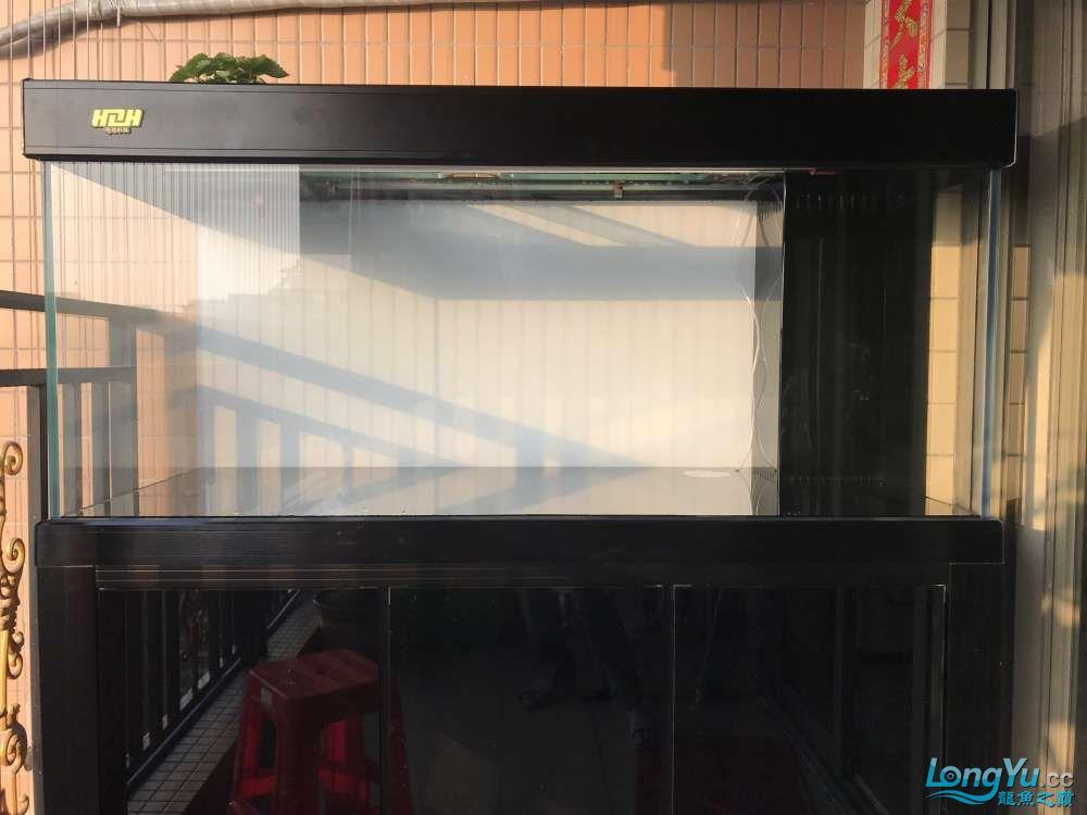 重庆粗线银板鱼哪个店的最好新人再次入水开缸大吉 重庆观赏鱼 重庆水族批发市场第58张