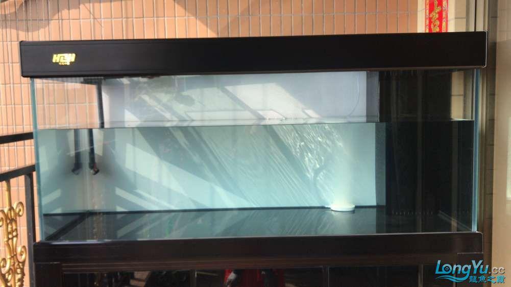 重庆粗线银板鱼哪个店的最好新人再次入水开缸大吉 重庆观赏鱼 重庆水族批发市场第60张