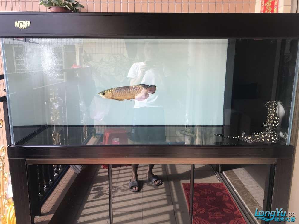 重庆粗线银板鱼哪个店的最好新人再次入水开缸大吉 重庆观赏鱼 重庆水族批发市场第67张