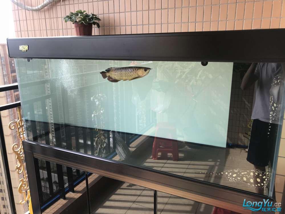 重庆粗线银板鱼哪个店的最好新人再次入水开缸大吉 重庆观赏鱼 重庆水族批发市场第68张