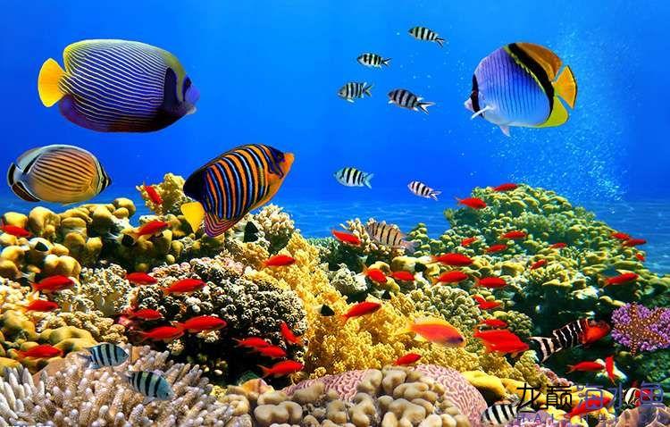 海洋素材10.jpg