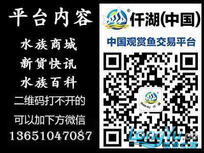 北京鱼部公众号新.jpg