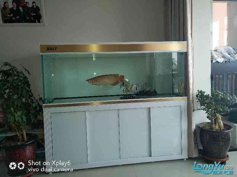 进鱼已到位不错就是上下水不平衡有些不好调整 兰州龙鱼论坛 兰州龙鱼第2张