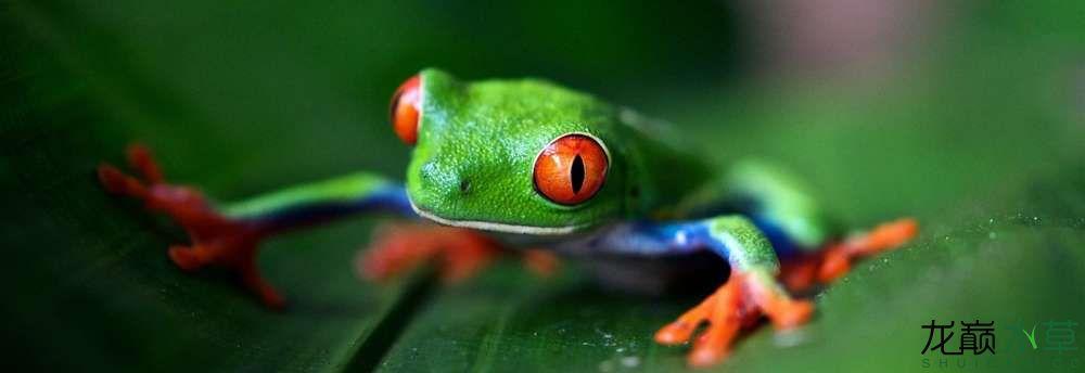 箭毒蛙.jpg