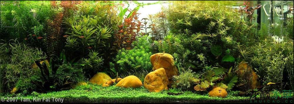 鹅卵石3.jpg