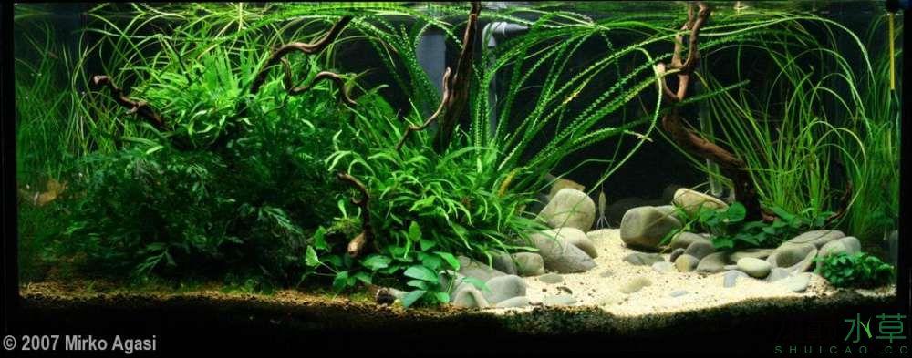 鹅卵石4.jpg