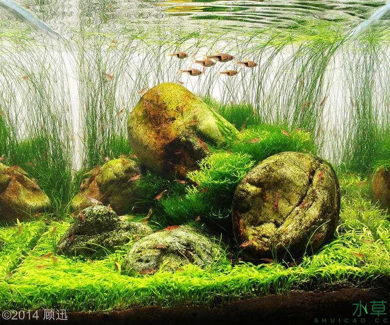 鹅卵石10.jpg