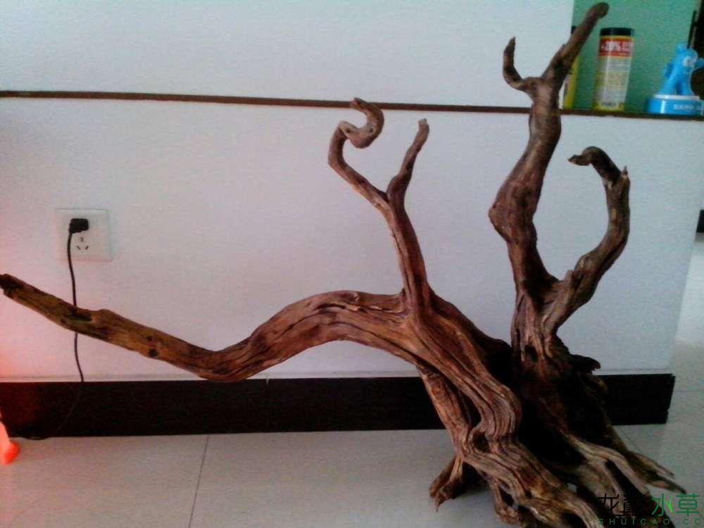 沉木1.jpg