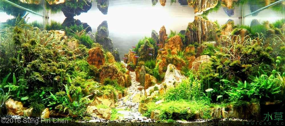 木化石23.jpg