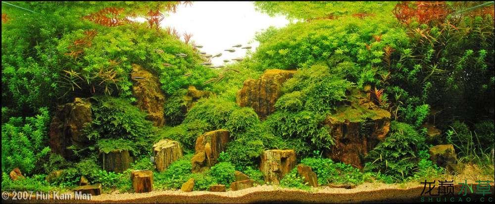 木化石1.jpg