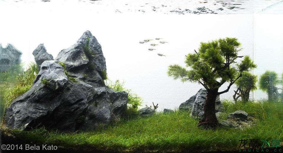 青龙石12.jpg